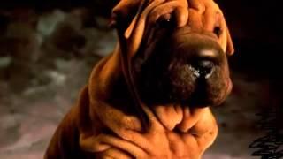 мое любимое животное-собака