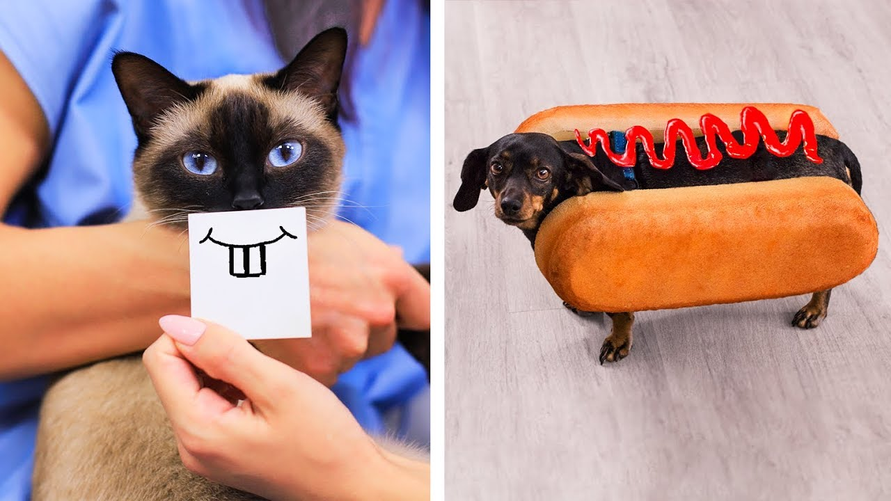 17 مقلب مضحك وابتكارات لحيوانات أليفة