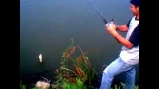 Repeat youtube video ตกปลาช่อนโคตรหมาน