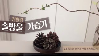 [생활꿀팁] 친환경 솔방울 가습기 eco-friendl…