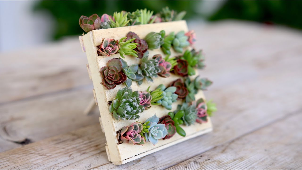 Popsicle Stick Mini Pallet W Succulents Garden Answer