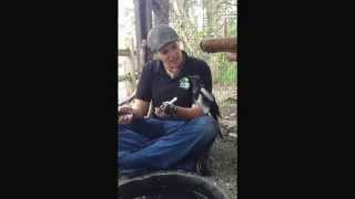 George the talking Magpie
