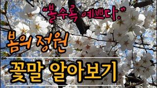 농장에 핀 봄꽃 구경오세요~(#꽃말모음,#봄꽃나무,#봄…