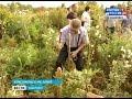 Вести-Хабаровск. Бесплатные земельные участки многодетным семьям