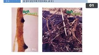 식물보호기사 실기 모의고사 11