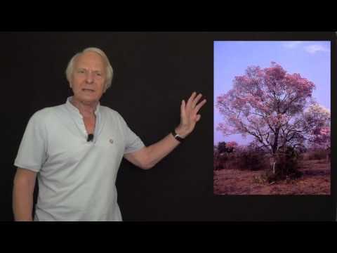 Rhodiola Ashwagandha | Bienfaits - Santé par les plantes - Vertus santé
