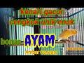 Kenari Gacor Cengkok Unik Enak  Mp3 - Mp4 Download