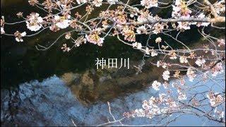 神田川(syouyou cover)日语/中文歌词版