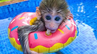 A day of Baby monkey Bon Bon and beautiful friendship with  puppy So cute