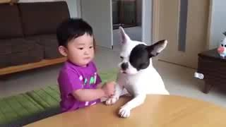 Whatsapp funny videos 2017   Most funny DOG AND KIDS Videos 2017