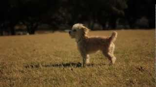 Morkie Gallops With A Frisbee | The Daily Puppy