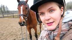 Mitä tehdä jos hevosen selässä ärsyttää?