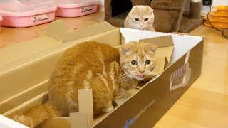 新しい掃除機に興味津々な兄弟猫