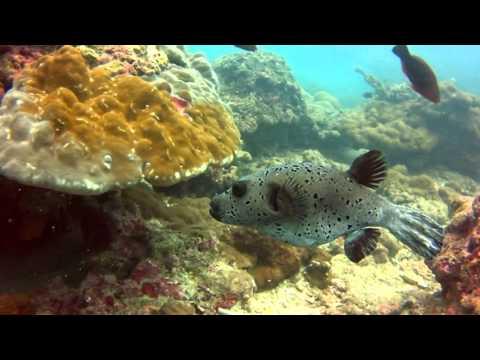 Phi-Phi Island scuba diving