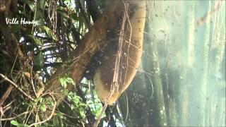 Ville Raw Wild Honey - Wild Flower