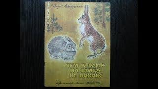 Игорь Акимушкин. Чем кролик на зайца не похож.