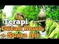 Terapi Cucak Rowo Gacor Di Alam Suara Air Pancingan Cucak Rowo Agar Cepat Ropel  Mp3 - Mp4 Download