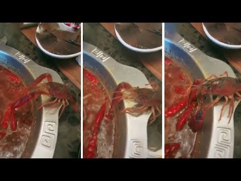 Crayfish Amputates It's Own Leg to Escape