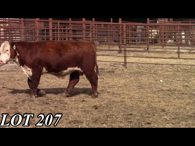Mead Angus Farms Lot 207