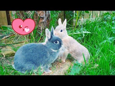 Live rabbit cam