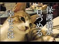 かわいい子猫が突然お家にやってきた-その時、先住猫達は・・・?!9週間目4-kitten came to our house 62