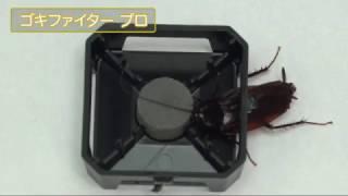 【殺虫効力実験】ゴキファイター プロ(クロゴキブリ)