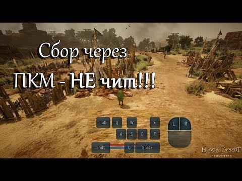 Сбор через ПКМ - НЕ чит! Black Desert Online.