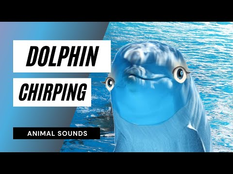 The Animal Sounds: Dolphin Chirps - Sound Effect - Animation