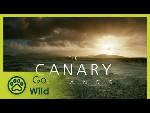 Canary Islands - Part II: The World of the Fire Mountains - The Secrets of Nature