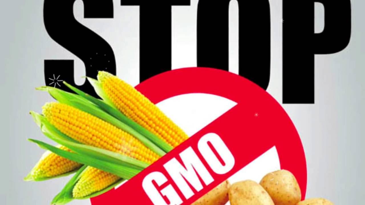 Опасны ли продукты с ГМО