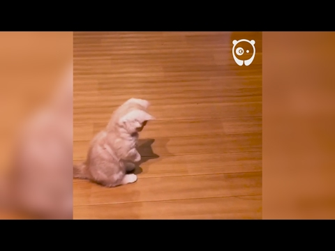 Kitten Meets His Shadow