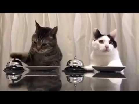 SMART CATS- GATOS PIDEN COMIDA