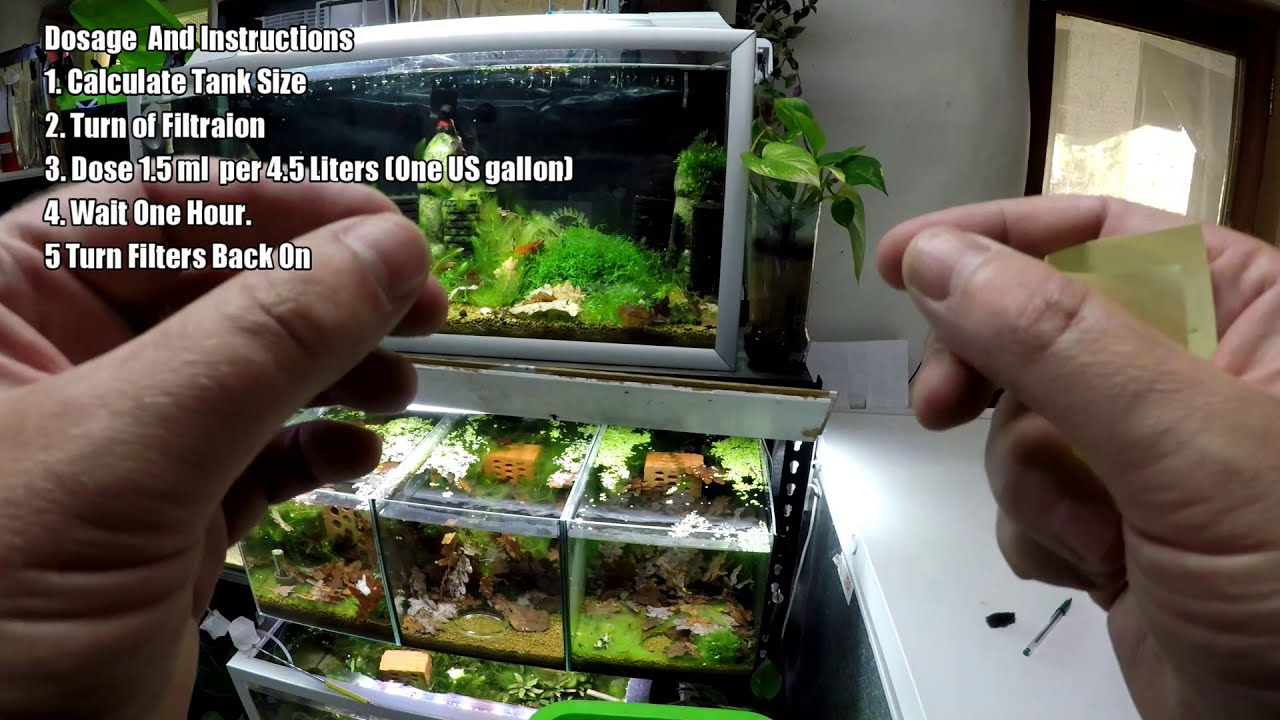 Hydrogen Peroxide In the Shrimp Tank – Game Changer