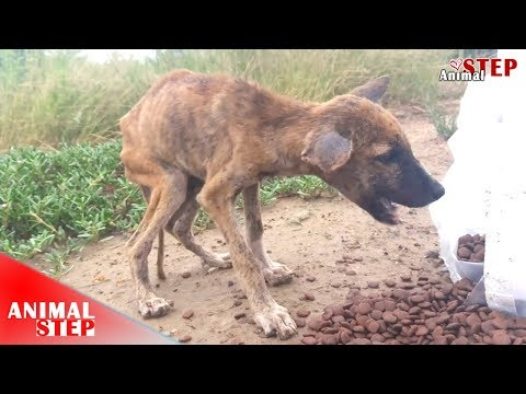 Starving Street Dog Gets an Amazing Recovery