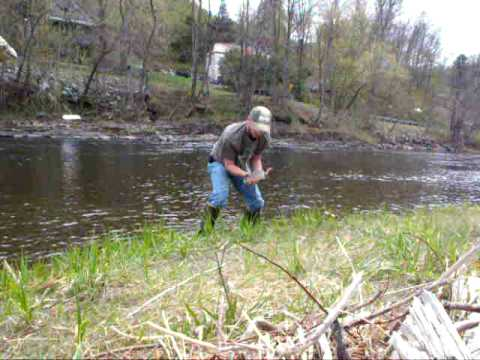 Rainbow trout fishing in vermont youtube for Fishing license vt
