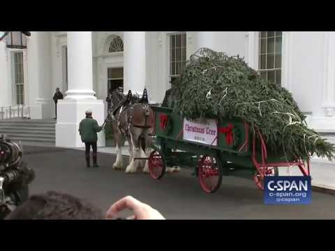 White House Christmas Tree Delivery (C-SPAN)