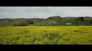 Bethel Fields of Gold DJI Air 2S 5K@30FPS