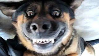 TOP 10 dog barking videos 2019 ♥ Dog barking sound - Funny dogs