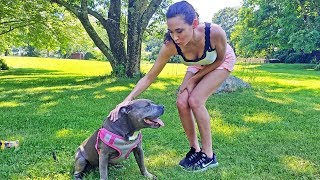 she-wanted-to-meet-my-pitbull