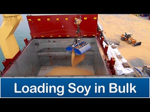 Loading soy in bulk - Arica port, Chile (CASACL)