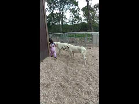 New Livestock Guardian Dogs