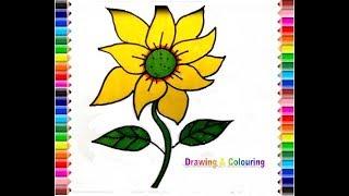 How to draw Sun Flower (Gambar Bunga Matahari)