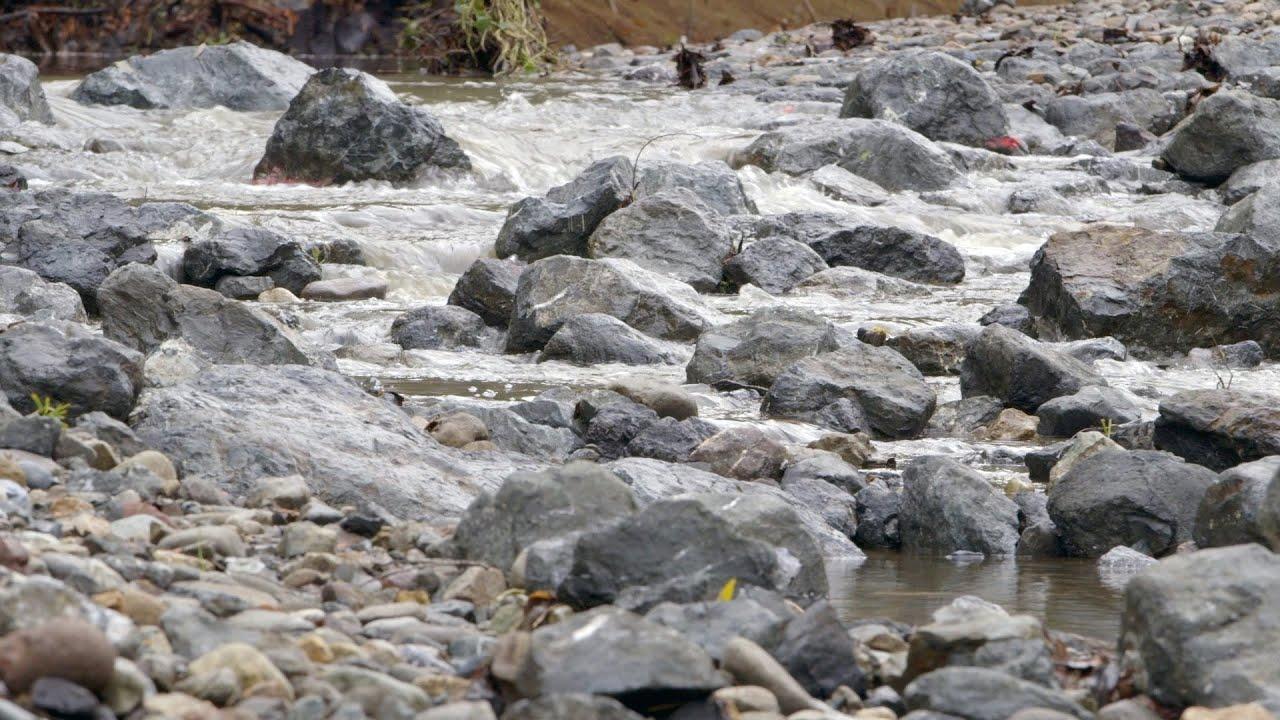 Stanford removes Lagunita Diversion Dam