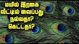 மயில் இறகை வீட்டில் வைப்பது நல்லதா? கெட்டதா? | Benefits of Peacock Feather | Peacock Feather