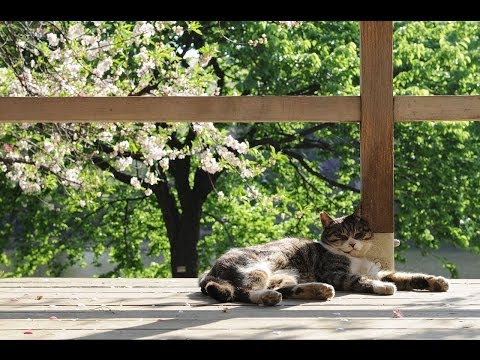 Sleeping Cats Chillout Lounge Mix HD Del Mar