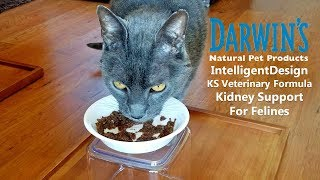 Raw Cat Food Review - Darwin's IntelligentDesign KS Veterinary Formula Kidney Support for Felines