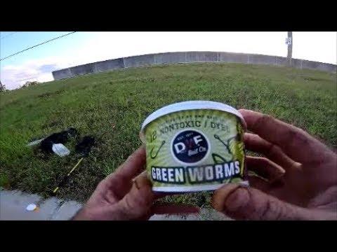 Green Worms Vs Nightcrawlers, Cichlid Fishing