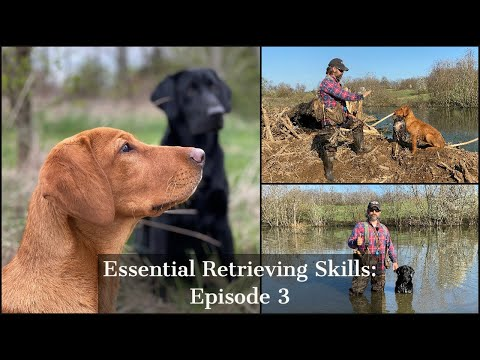 Labrador Retriever | Essential Training Skills Episode 3