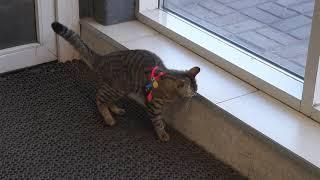 Кошка которая гуляет сама по себе