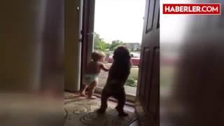 Babanın Eve Geldiğini Gören Bebek ve Köpek Çıldırdı